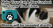 Make Your Cat a Star Contest